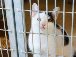 cat inside a cage in a cattery