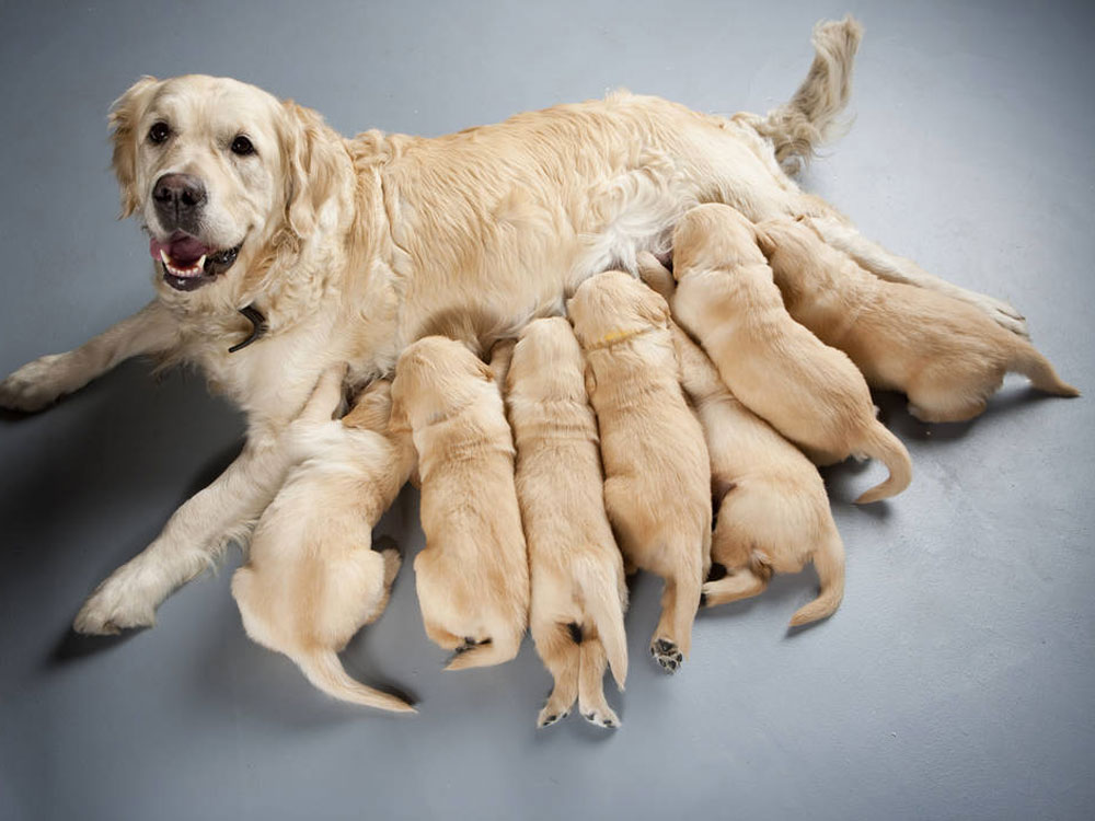 dam and puppies