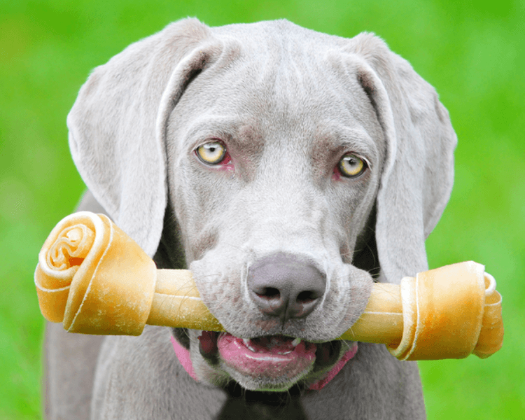 dental chew in dogs mouth
