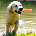 dog biting a toy near the river