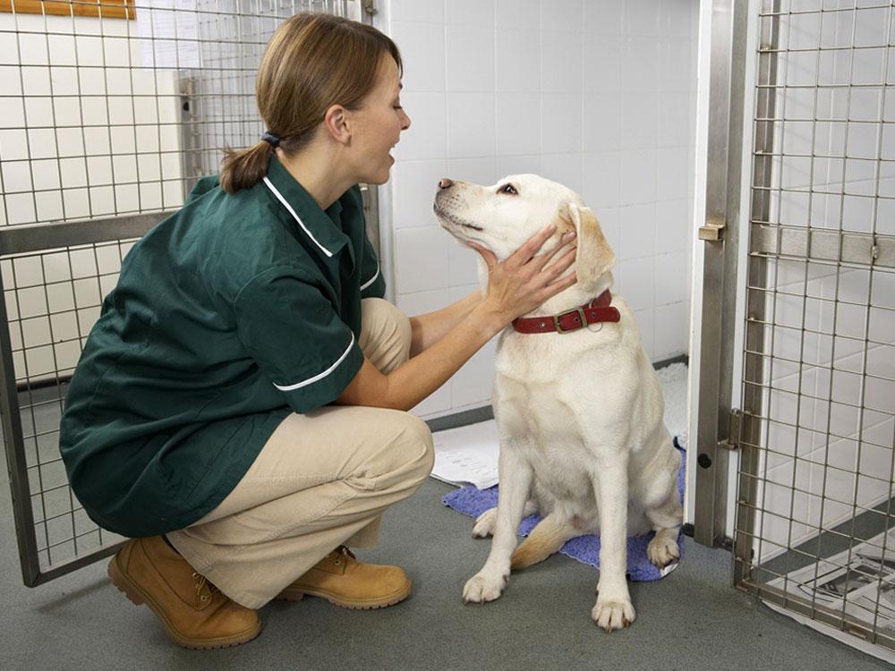 dog boarding kennel staff