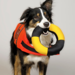 dog wearing a lifejacket with a life buoy in its mouth