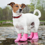 dog wearing pink boots