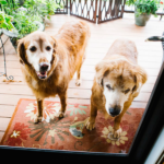 two dogs outside the door