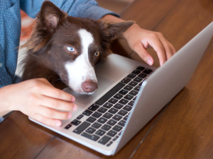 How Online Vet Advice Can Help You