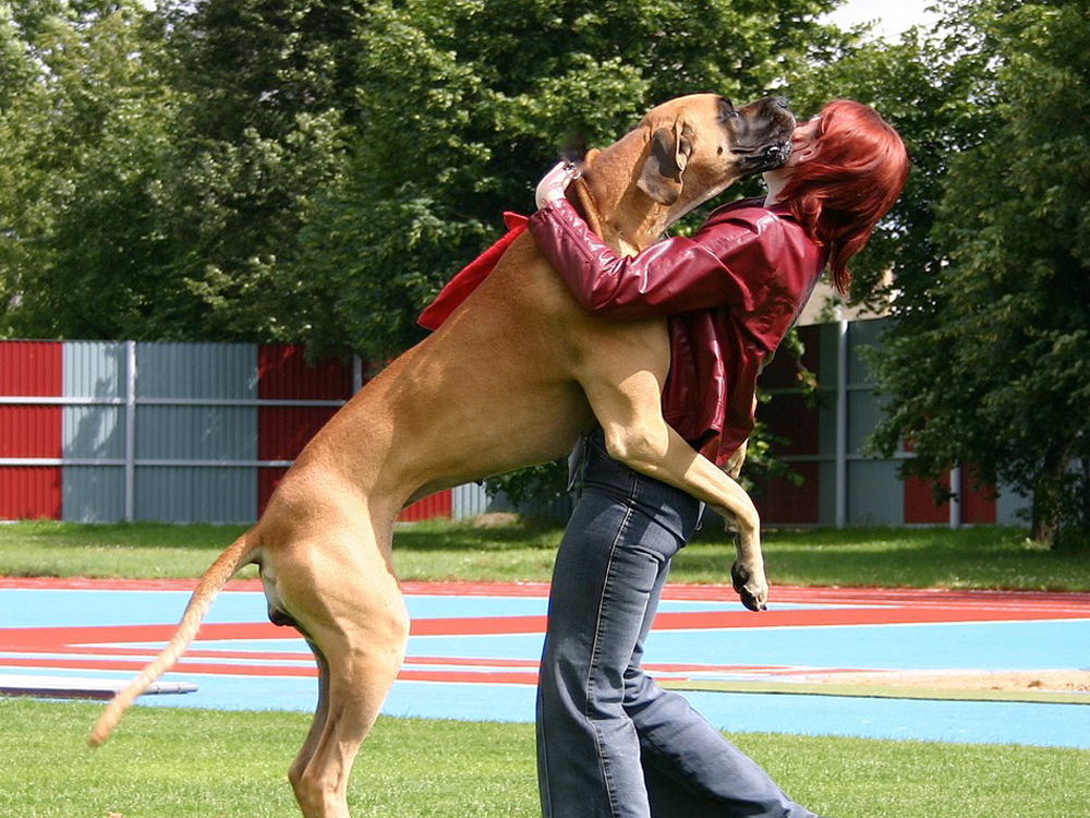 dog jumping at owner