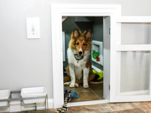 6 Essential Things to Prepare before Bringing a New Dog Home