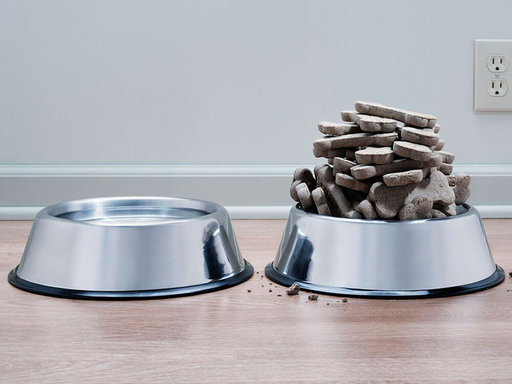 food and water bowl are two of the things to prepare in getting a new puppy