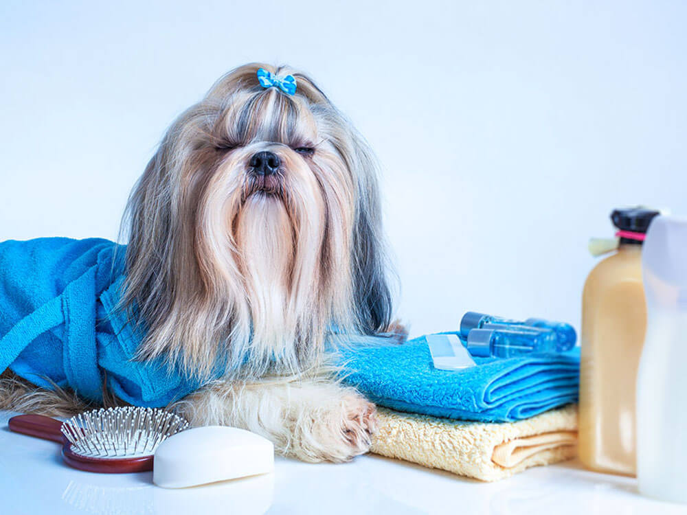 dog grooming supplies are one of the few things to prepare in getting a new puppy