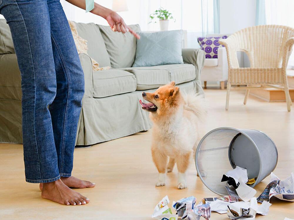 owner scolding a dog