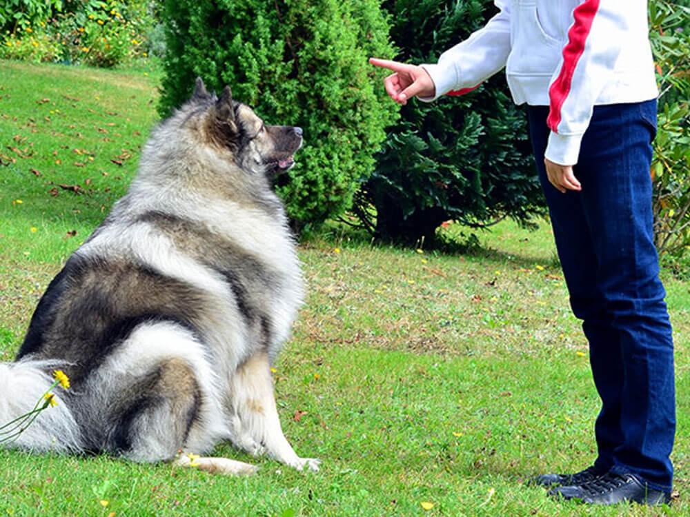 girl instructing a dog