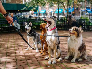 The Pros and Cons of a Dog Walking Service