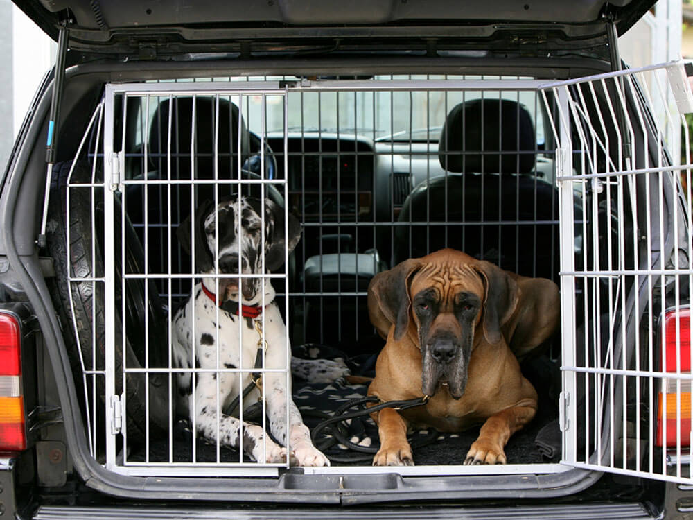 dogs travelling in cage