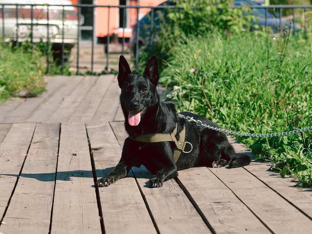 chain dog lead
