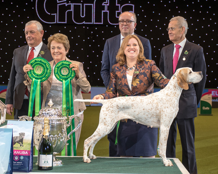 Crufts 2018, Pointer, Kanix Chilli, owned by Miss H Blackburn-Bennett