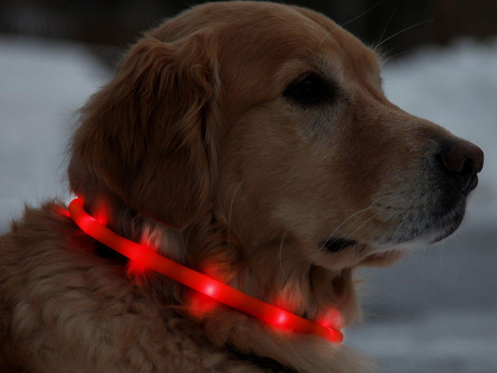 light dog collar
