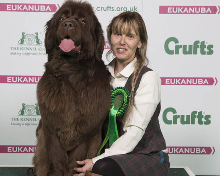 Crufts 2018, Nana, a Newfoundland hailing from Blackburn