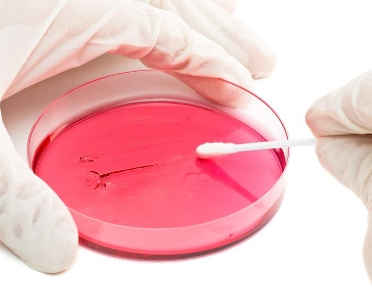 tissue sample in a petridish