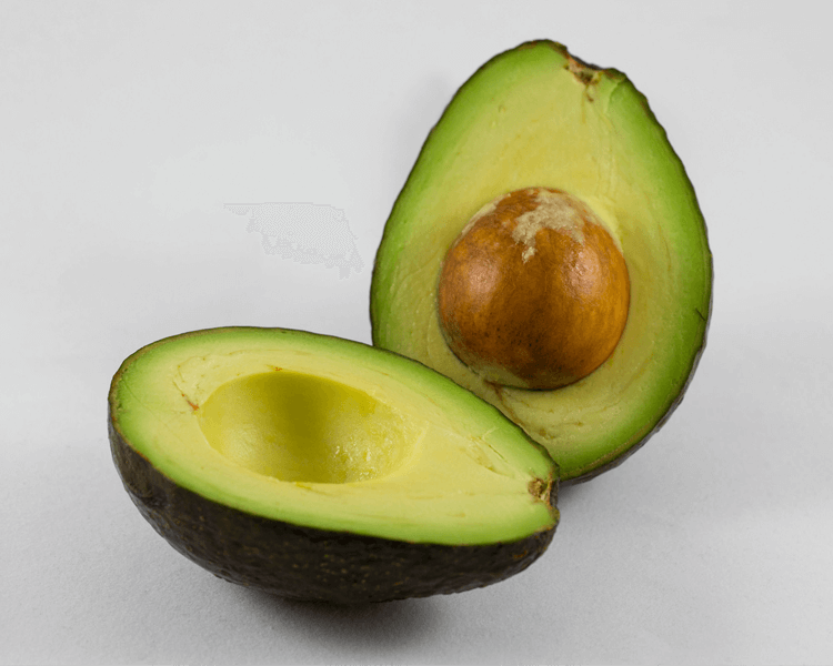avocados are harmful to dogs