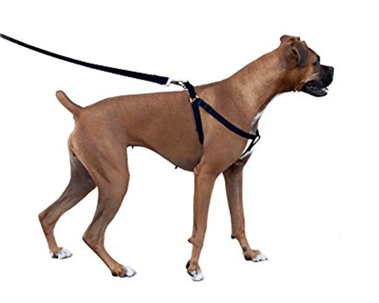 dog wearing a back attachment harness
