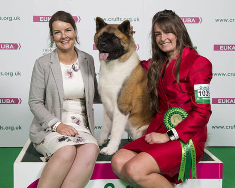 Chanel, an Akita from Prenton, Merseyside. Crufts 2018