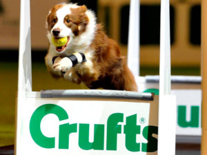 Crufts 2018 Best in Show: Which One Is Your Bet?