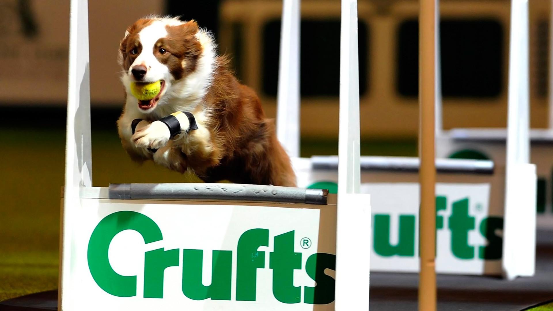 Crufts Dog Show 2018