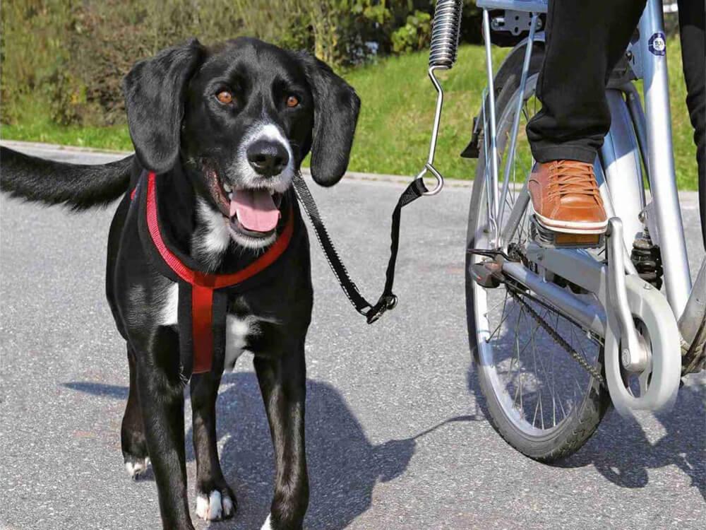 cycling dog lead