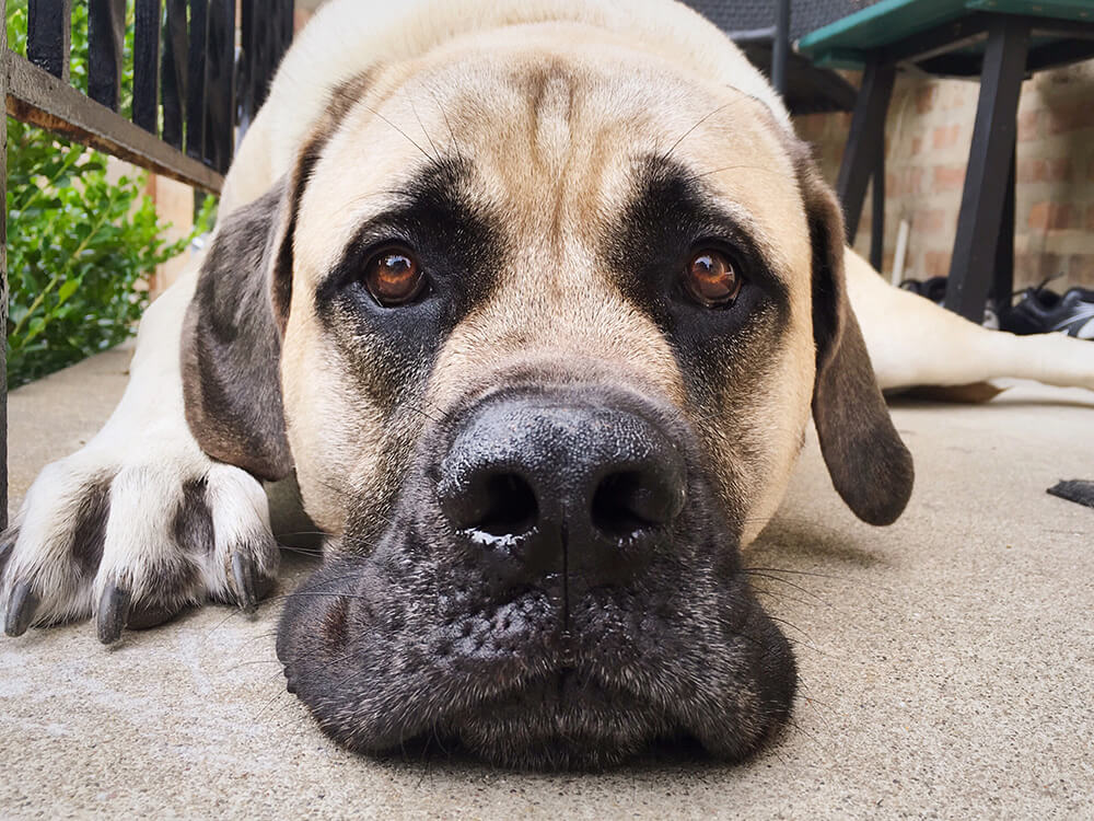 dog bloat