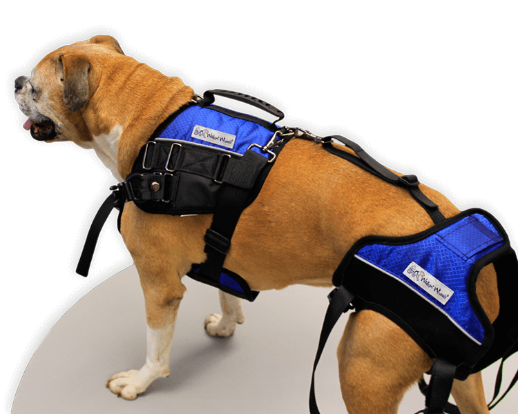 dog wearing a mobility harness