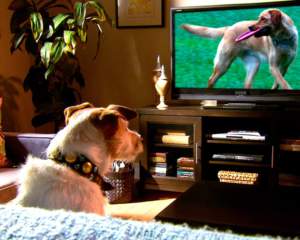 dog watching a television