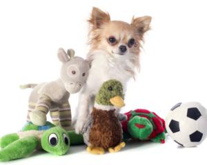 dog with many toys