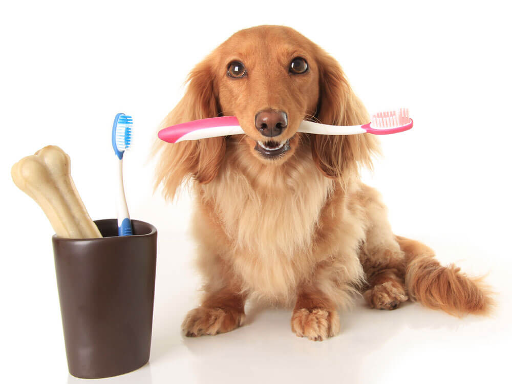 dog biting a toothbrush