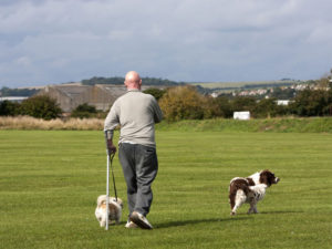 dogs taking cared of by a dog walker