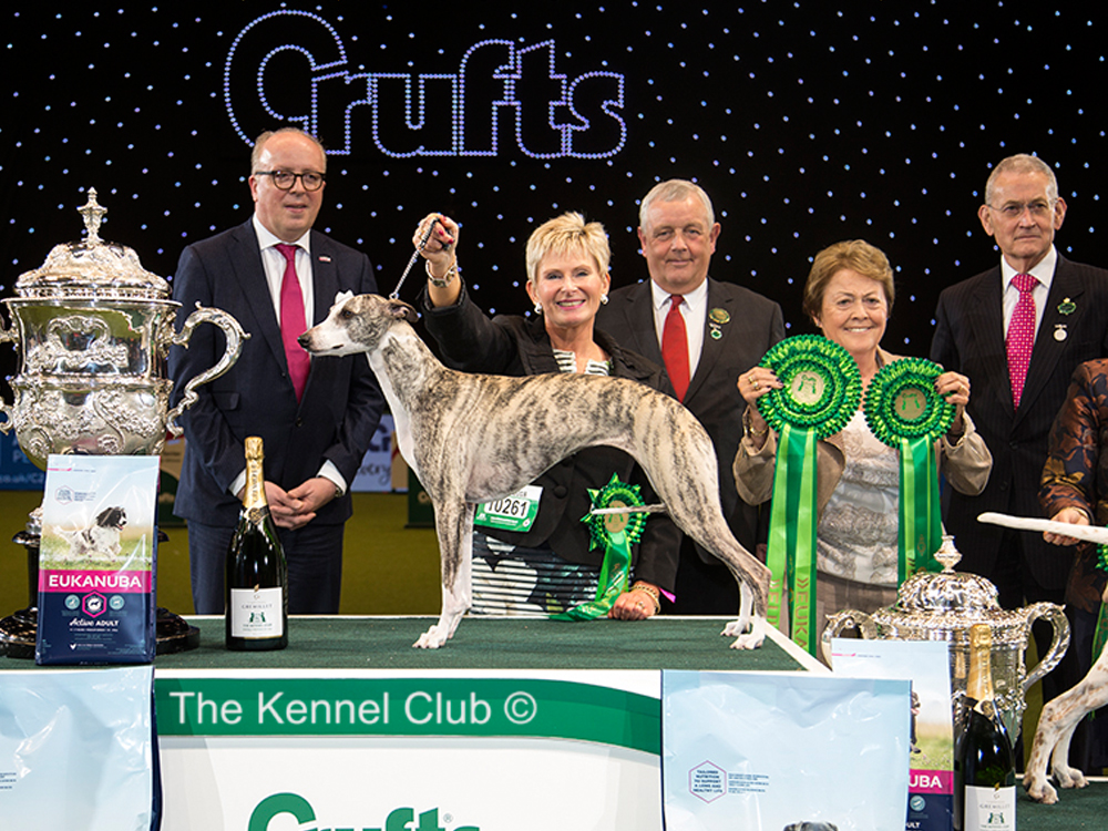 Crufts 2018, Whippet, Collooney Tartan Tease owned by Yvette Short of Edinburgh, Scotland