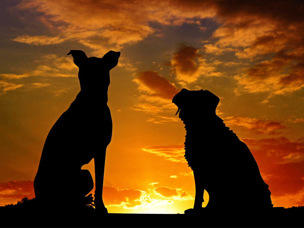 dog and canine buddy watching sunset together