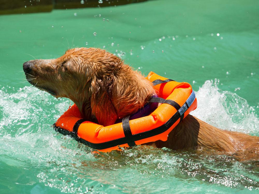 flotation dog collar