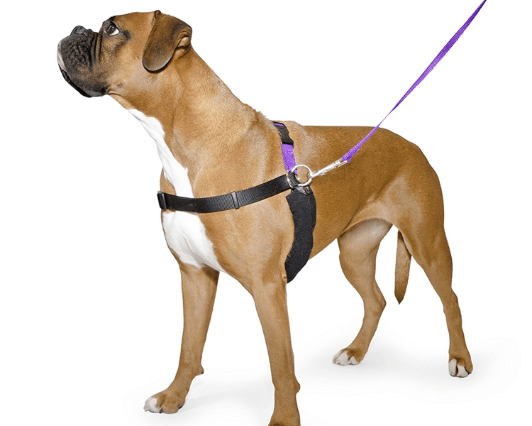 dog wearing a front-clip harness