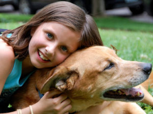 The Importance of Looking After Your Dog's Dental Health