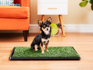 The Guide for a Smoother Puppy Toilet Training