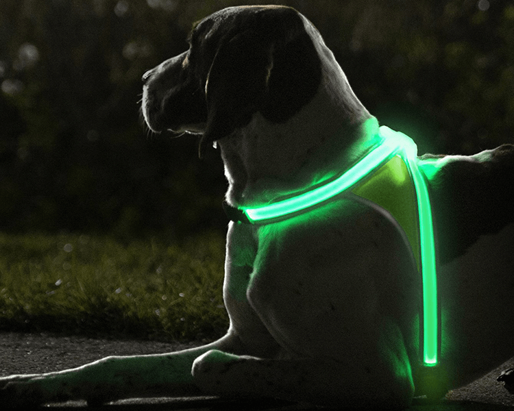 dog wearing a light-up harness
