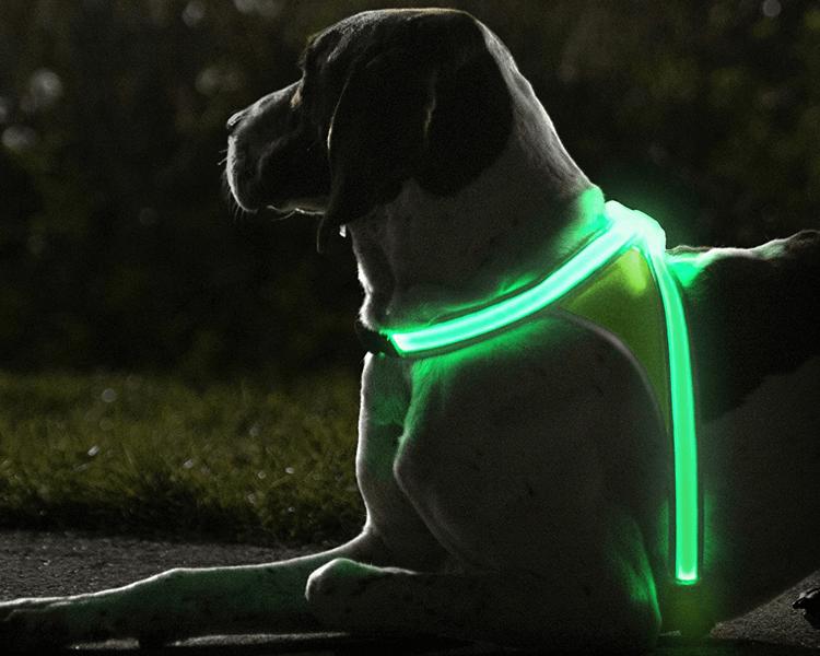 dog wearing a light-up harness
