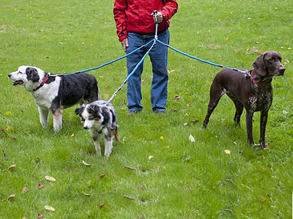 multiple dog lead