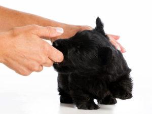 puppy biting hands 3