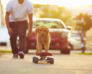 puppy on skateboard followed by a man