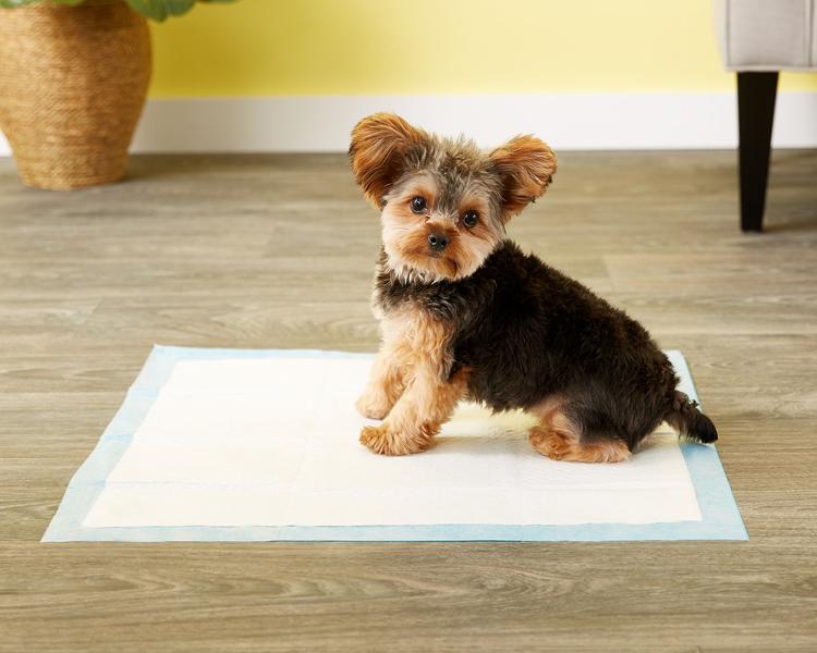 puppy toilet training 1
