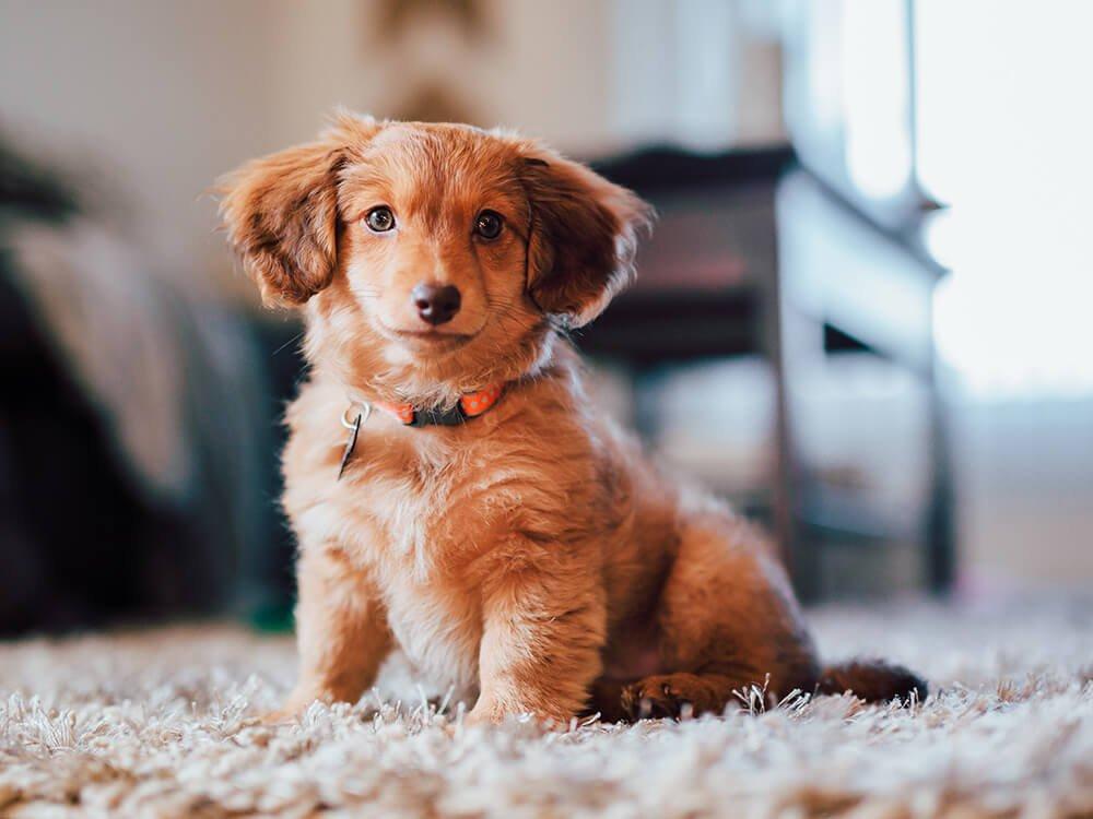 puppy toilet training 5