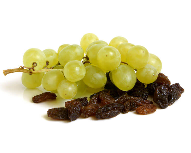 grapes and raisins are harmful to dogs