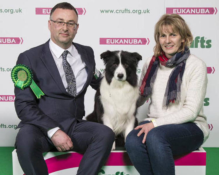 Crufts 2018, Roo, an Irish Border Collie from County Louth