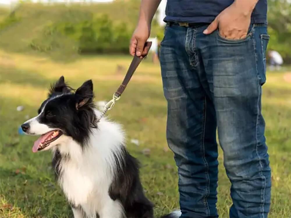short dog lead